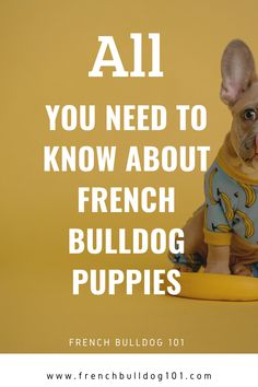 Have you added an new frenchie puppy to your household? How do you care for your new French Bulldog Puppy? Don't worry, we've got you covered with this complete guide for French Bulldog Puppies and everything you need to know. French Bulldog Breed, French Bulldog Facts, French Bulldogs, First Night With Puppy, Living With Dogs, Dog Cleaning, What Dogs, Most Popular Dog Breeds, Dog Safety