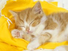 Wallpaper of Kitten Wallpaper for fans of Cats 12250973 Fluffy Kittens, Cute Cats And Kittens, Kittens Cutest, Kittens Meowing, Pretty Cats, Beautiful Cats, Cute Cat Wallpaper, Hd Wallpaper, Animal Wallpaper