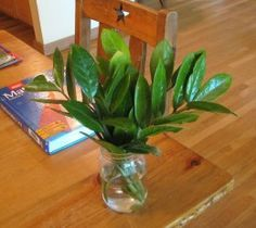 Best 12 Written by someone who has killed many houseplants, this article extolls the virtues of the ZZ plant, the easiest and prettiest houseplant ever! Glossy, tough, healthy leaves and minimal requirements