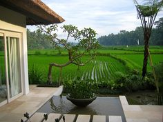 Dawn breaking over the rice fields, River Moon Villa, Ubud, Bali