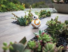 Meet BB-8 – the app-enabled #Droid that's as authentic as it is advanced. BB-8 has something unlike any other robot an adaptive personality that changes as you play.