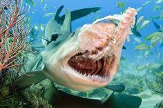 Todd, que foi criado em um barco nas Bermudas e começou a mergulhar aos 12 anos, criou uma série de fotos com as mais diferentes espécies desses animais em diversas situações.