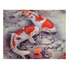 Red and White Koi Fish Pond Panel Wall Art - click/tap to personalize and buy