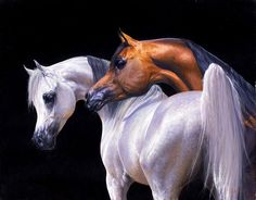 Looking like a painting: Two beautiful Arabians