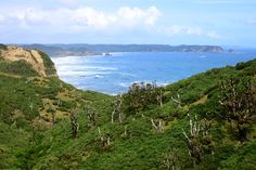 View of the Pacific coast from our hike on Chiloé Island - - Photo by Andrew Harper via @harpertravel
