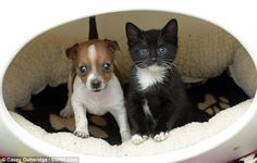 cute rescue kitten and puppy best friends- so precious. How i wish i could have them!!!!