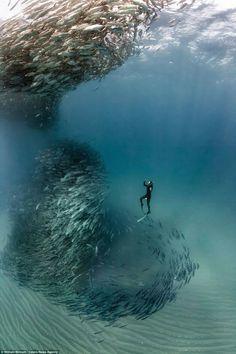 sea life - sea life photography - sea life underwater - sea life artwork - sea life watercolor sea l