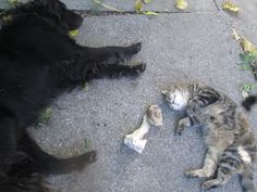 Too hot these days, for humans and animals alike Lucky and her Cats and Granma Trixi don't fight for the bone anymore. #cats #catlovers #thepowerofrelationship https://plus.google.com/+AdelheidHornlein/posts/jfcZqht2VdJ