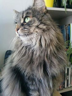 Our cat Renttu living it up in the UK born and raised in Finlandhttps://i.redd.it/gkdy4c88rkj01.jpg