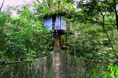 Staying in a Jungle Treehouse in the Amazon!