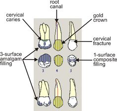Medical Charting Symbols   Qualitative Investigation of the Content of Dental Paper-based and ...