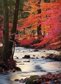 Science Discover Beautiful fall leaves along the river Nice scenery. Beautiful World Beautiful Places Amazing Places Peaceful Places Beautiful Scenery Beautiful Flowers All Nature Autumn Nature Belle Photo Beautiful World, Beautiful Places, Amazing Places, Peaceful Places, Beautiful Scenery, Beautiful Flowers, All Nature, Autumn Nature, Belle Photo
