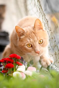 Different Types Of Cats Archives - Cats In Care Most Beautiful Animals, Beautiful Cats, Cute Cats And Kittens, I Love Cats, Chat Maine Coon, Types Of Cats, Gatos Cats, Matou, Cat Pose