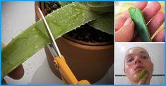Aloe vera je velice populární rostlinnou, která svou popularitu získala nejen díky svému vzhledu ale také pro své příznivé účinky pro zdraví. Aloe vera dokáže vyřešit spoustu problému. V dnešním článku si ukážeme jak aleo veru používat na pleť. Věřte, že vaše pleť bude vypadat měkčí a o několik let …