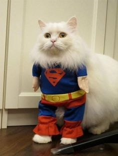 Funny shit and cute animals. Love Pet, I Love Cats, Cute Cats, Costume Chat, Pet Costumes, Baby Cats, Cats And Kittens, Chat Facebook, Funny Animals