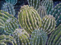 New - CACTUS PATCH, An Original Acrylic Fine Art Painting of A Patch of Cactus