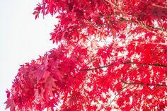 [Maple Tree Forest] 대한민국 No.1 감성채널. 얼라우투(allowto.co.kr)