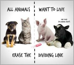 People who believe at heart that it is wrong to harm animals for personal pleasure or profit are already professing vegan beliefs. Their next logical step is to align their core values with their everyday actions and lifestyle by going vegan. Stop Animal Cruelty, Animal Testing, Animal Rescue, Mon Combat, Why Vegan, Vegan Vegetarian, Vegetarian Quotes, Vegan Meals, Vegan Recipes
