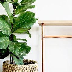 The High Oak Table ~ We make this piece in custom sizes to fit your spaces ~ shoot us a message if you like the sound of that. Space Shot, Fiddle Leaf Fig, Oak Table, Your Space, Ladder Decor, Product Design, Instagram Posts, Plants, How To Make