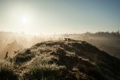 At dawn in Nationalpark Thy of Denmark. I got up at am to go to this place and it was totally worth it. An amazing morning with mist and absolute no wind. A dreamlike scenario/world! Denmark, Mists, Dawn, My Photos, To Go, Country Roads, Landscape, World, Amazing