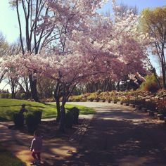 Spring at Osage Park, Danville CA - The Kids Are Outside