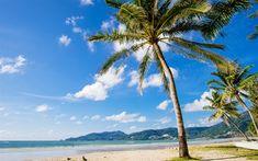 Herunterladen hintergrundbild palmen, tropischen insel, strand, meer, sommer, reise, blauer himmel