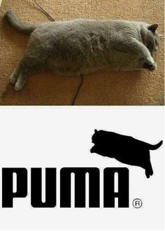 Diet quotes funny hilarious fat cats ideas for 2019 Funny Animal Jokes, Really Funny Memes, Stupid Funny Memes, Cute Funny Animals, Funny Relatable Memes, Funny Animal Pictures, Haha Funny, Cute Baby Animals, Funny Cute