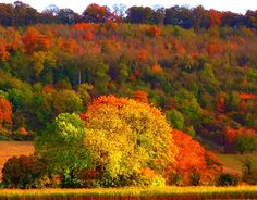 Autumn in The Chilterns, England