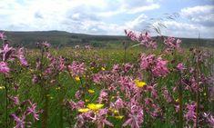 Hannah's Meadow Nature Reserve – Durham Wildlife Trust Meadow Pipit, Marsh Marigold, Globe Flower, Barnard Castle, Rare Species, Meadow Flowers, Nature Reserve, Durham, Pathways