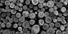 2015.05 Holz an der Isar