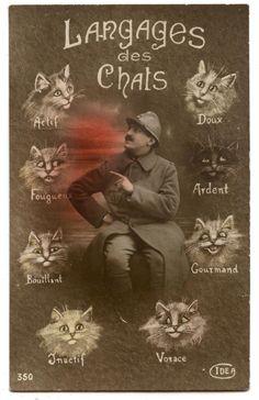 * Langage des chats - Carte postale 1914-1918