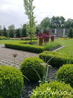 Moja codzienność - ogród Oli - strona 2050 - Forum ogrodnicze - Ogrodowisko