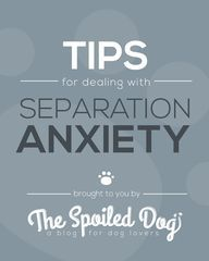 Tips for Dealing with your Dog's Separation Anxiety   The Spoiled Dog
