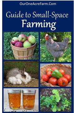 How to Start a Backyard Farm: There are so many options for small space homesteading! This covers space saving gardening small livestock foraging and more. The post How to Start a Backyard Farm appeared first on Gardening. The Farm, Mini Farm, Small Farm, How To Farm, Small Small, Organic Gardening, Gardening Tips, Urban Gardening, Indoor Gardening