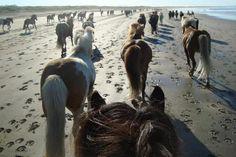 Island – Snæfellsnes auf dem Rücken eines Pferdes: Schon die Wikinger wussten die äusserst trittsicheren und umgänglichen Island-Pferde zu schätzen. So erstaunt es nicht, dass Ritte durch die atemberaubende isländische Natur noch heute ein einzigartiges Erlebnis sind. Steigen Sie auf und kommen Sie mit auf meine Reittour auf der Halbinsel Snæfellsnes.