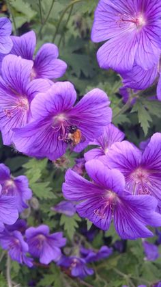 Bee in beautiful purple flowers. Raebattesonart
