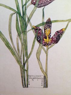 Fritillaria, Walberswick, by Charles Rennie Mackintosh and Margaret Macdonald Mackintosh, 1915. Watercolour http://www.achome.co.uk/pictorial/cmack55.htm