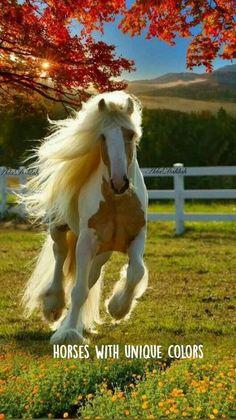 Baby Horses, Cute Horses, Horse Love, Wild Horses, Draft Horses, Horses And Dogs, Most Beautiful Horses, All The Pretty Horses, Animals Beautiful