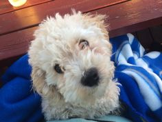 Billy | cutest puppy