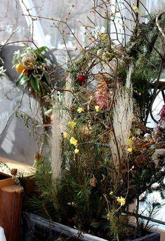 真冬の植物園     https://www.facebook.com/coppicegarden/photos/pcb.1870504516356407/1870486139691578/?type=3&theater