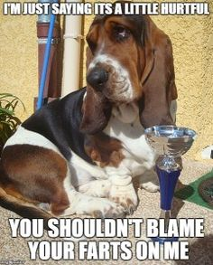 It's bad to blame the basset for your own lack of couth.