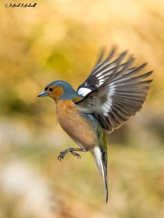 Autumn Wings by Mark Medcalf on 500px