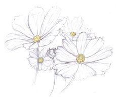 This would be a pretty and delicate daisy tattoo Daisy Flower Drawing, Flower Sketches, Art Sketches, Flower Art, Pencil Art, Pencil Drawings, Art Drawings, Watercolor Flowers, Watercolor Paintings