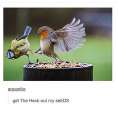 get The Heck out my seEDS!
