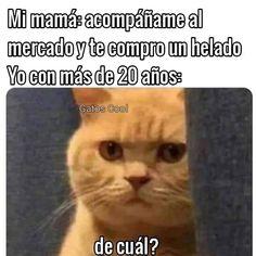 """Gatos Cool (@gatoscooloficial) agregó una foto a su cuenta de Instagram: """". . . . #memesdegatoscool #gatoscool😸 #gatos_cool #helado"""""""