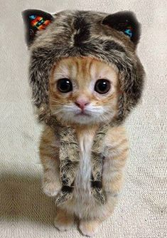I'm walking out of the common room holding my #cat. I start laughing and bump into you, my #kitten falls and holds onto your pants. -Ronna (open rp)