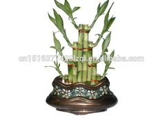Layer Lucky Bamboo,Dracaena Sanderiana,Aquatic Plants,Ornamental Plants,Bonsai - Buy Aquatic Plants,Bonsai,Indoor Ornamental Plants Product on Alibaba.com