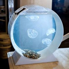 Create A Jellyfish Aquarium