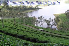 Munnar is a town and hill station in the southwestern state of Kerala, India. Munnar is situated around 1600 m above sea level, in the Western Ghats range of mountains. Tourist Places, Places To Travel, Places To Visit, Travel Destinations In India, Spice Garden, Munnar, India Tour, Hill Station, Incredible India