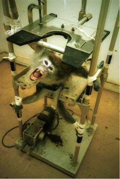 Kate Parratt - Again another disgusting image of a monkey being strapped down before tests commence. This image itself should make people want to stop buying products that are tested on animals. Stop now - help the animals. BE AWARE of what you are paying for when you purchase such cosmetic products.